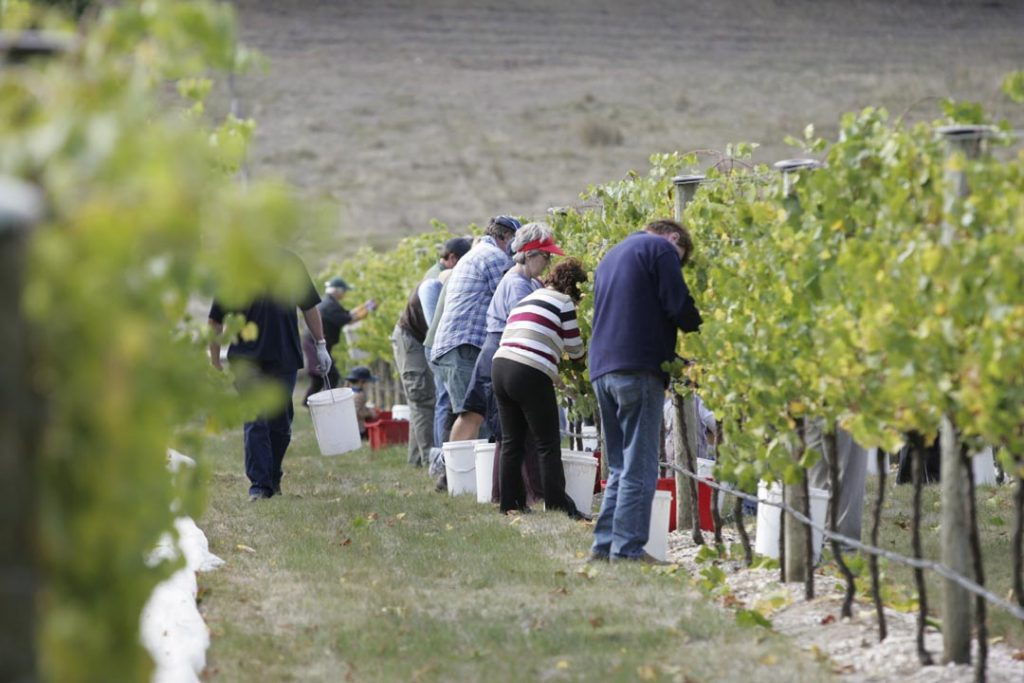 Labourers in the vineyard